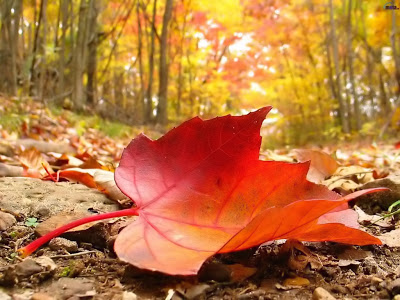 Autumn_falling_leaf